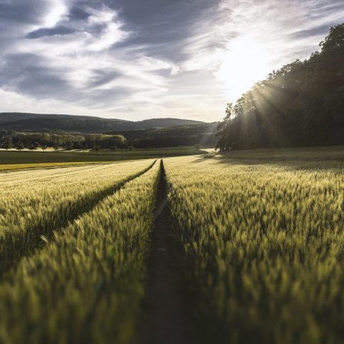 Bio Acqua Live Agriculture